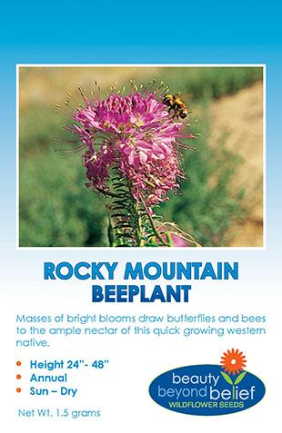 Rocky Mountain Beeplant