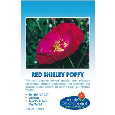Shirley Poppy
