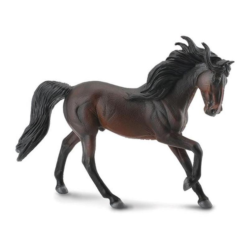 Bay Andalusian Stallion