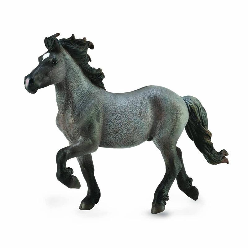 Icelandic Blue Dun Stallion