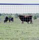 Select Hinge-Joint Field Fence – Commercial - FIELD FENCE COMM OKLA